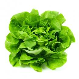 Predpestovanie zeleniny (http://www.modnetrendy.sk)